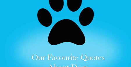 NewDoggy.com's 10 Favourite Quotes About Dogs | New Doggy