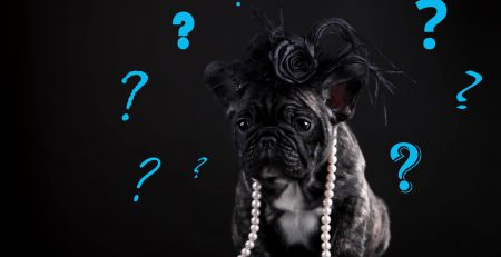 What to Consider When You Choose a Dog Breed | New Doggy