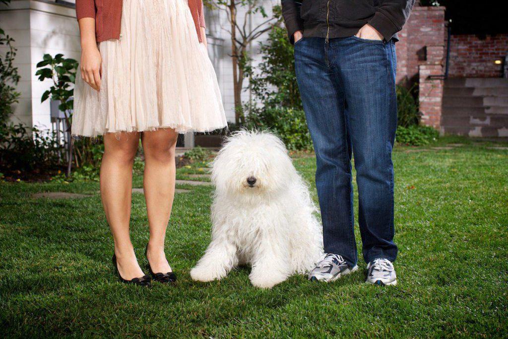 Mark Zuckerberg Dog Breed