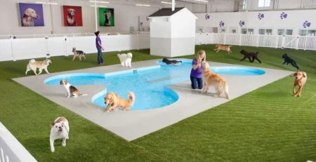 About Boarding Kennels | New Doggy