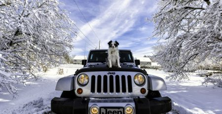 Your Dog and the Type of Your Car | New Doggy