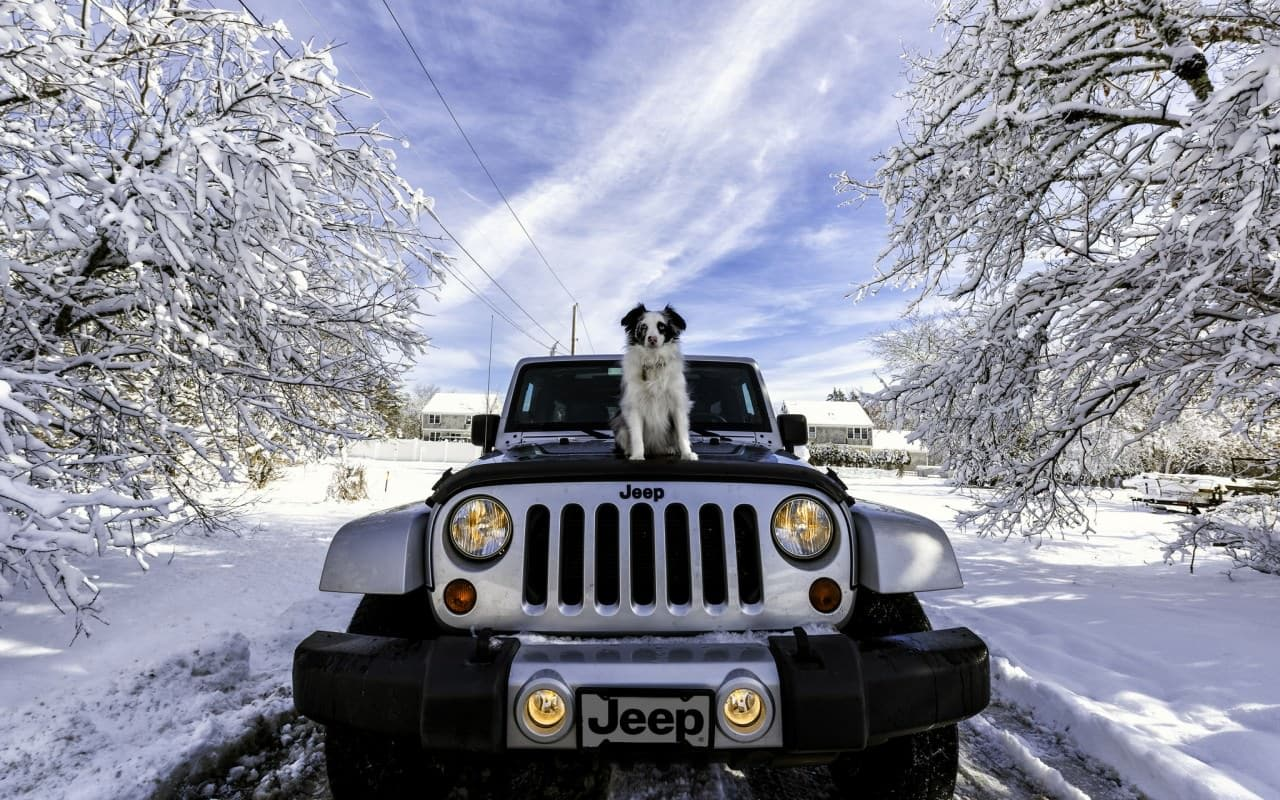 Your Dog and the Type of Your Car   New Doggy