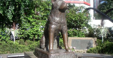 Hachiko | New Doggy