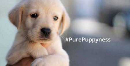 finding the right puppy