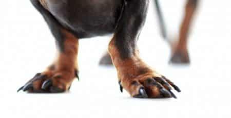 Nails blog NewDoggy.com