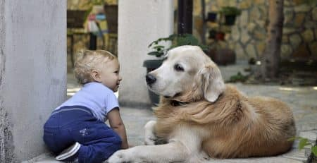 Dog breeds for a family with very young children blog NewDoggy.com