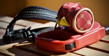 Collar vs harness blog NewDoggy.com