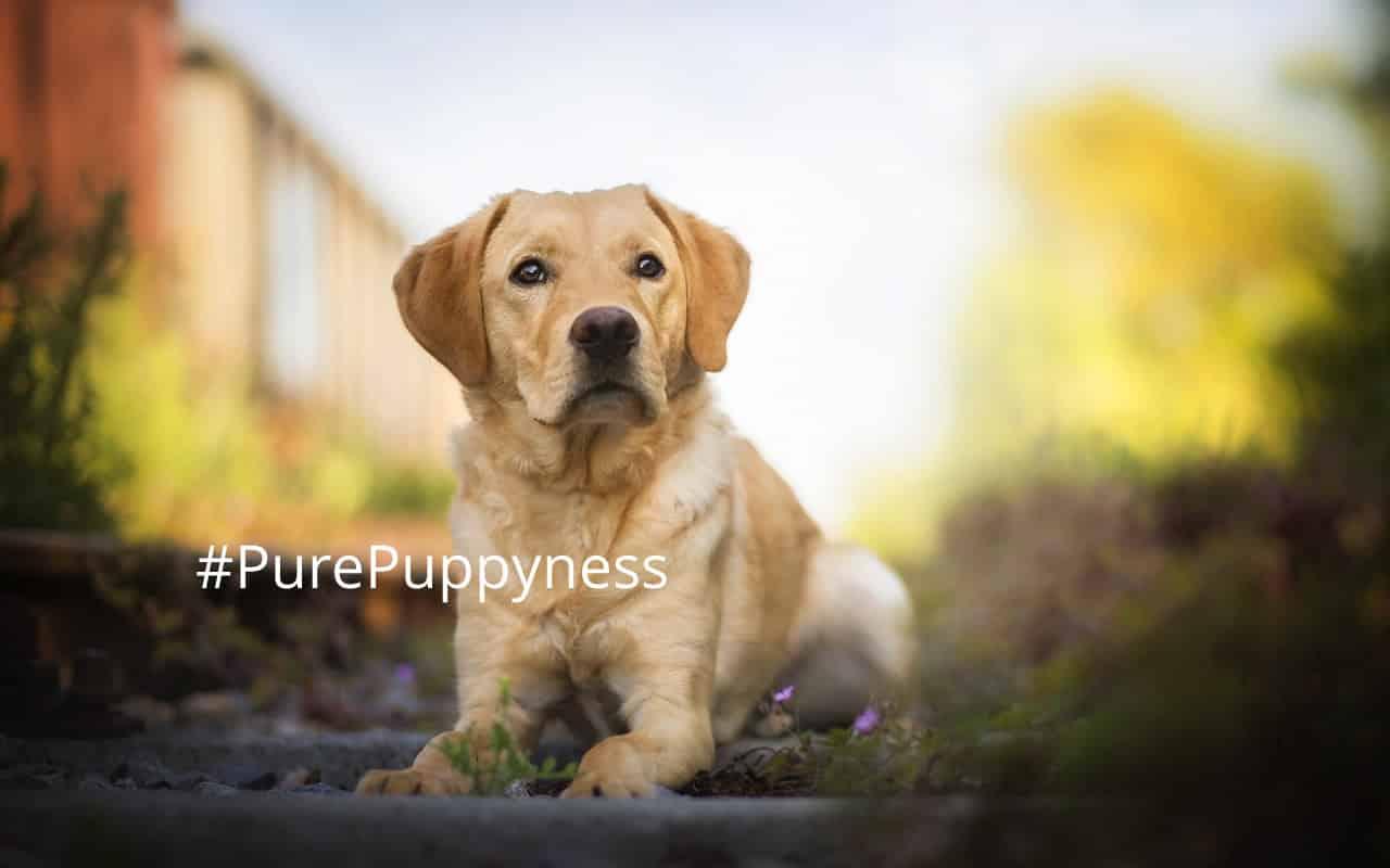 help my dog is eating poop!   newdoggy