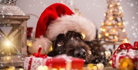 X-mas Hazards for dogs
