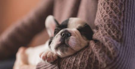 Puppyhood Sicknesses blog NewDoggy.com