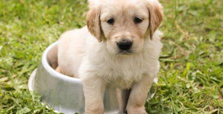 Parvovirus: The Dreaded Dog Disease | NewDoggy com