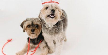 Virus-Detecting Dogs blog NewDoggy.com