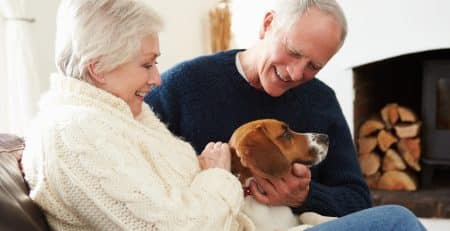 Best dog dog breeds for retired couple NewDoggy