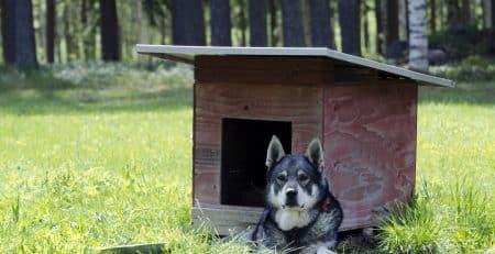 Swedish dog breeds blog NewDoggy.com