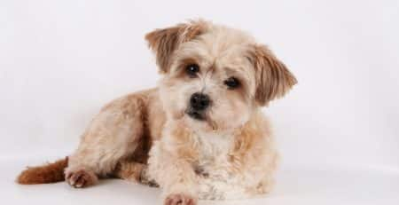 Cutest mixed dog breeds blog NewDoggy.com