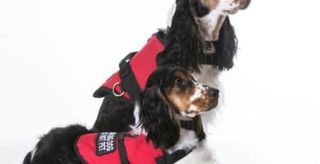 Service dogs blog NewDoggy.com
