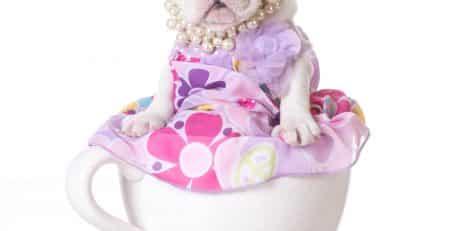 Teacup dogs blog NewDoggy.com