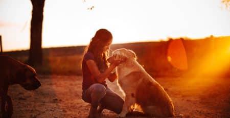 Emotional Support Dogs blog NewDoggy.com