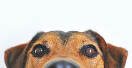 Top 10 dog breeds of 2021 blog newDoggy.com